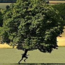 Εικόνα προφίλ του/της forest_run